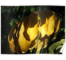 springtide's glow II - brillo de la primavera Poster