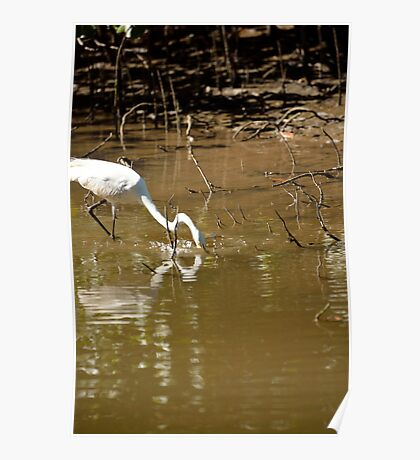 Great White Egret Fishing Poster