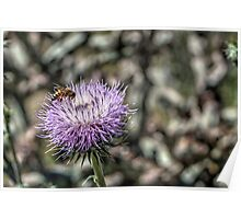 Thistle and Hungry Bee Poster