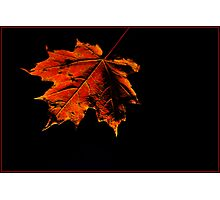 Maple Leaf Photographic Print