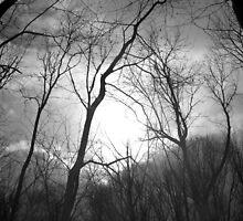 Winter Forest by SRowe Art