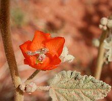 Orange Beauty by cindylu