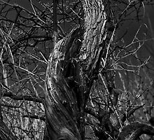 Twisted Tree Trunk by Violaman