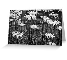Black and White Daisies Greeting Card