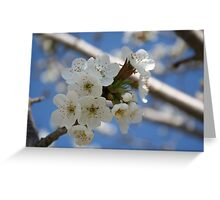 Beautiful Delicate Cherry Blossom Flowers Greeting Card