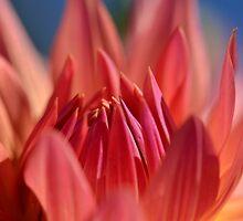 autumn dahlia by Glenda Williams