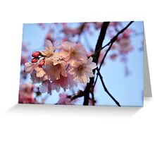 Cherry Blossoms & Blue Sky 2 Greeting Card