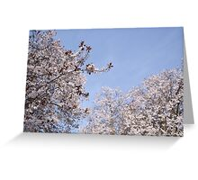 White Flowers Like Clouds Greeting Card