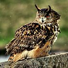 Eurasian Eagle-Owl by larry flewers