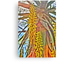 Agave Blossoms Canvas Print