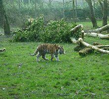 Tiger Patrol by Elly190712