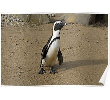 Penguin With A Long Neck Poster