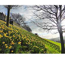 The Arrival Of Spring In Derry/Londonderry..........N Ireland Photographic Print