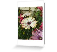 Garden of Daisies Greeting Card