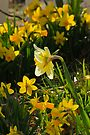 Surrounded By Spring by NatureGreeting Cards ©ccwri