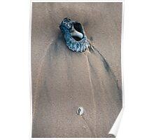 Warrain Beach Shells Poster