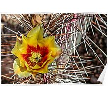 Long Spiked Prickly Pear Flower Poster
