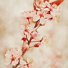 Plum Blossoms by Lynnette Peizer