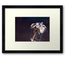©NS On Dry IA Framed Print
