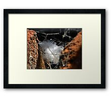 ©NS Feather IA Framed Print
