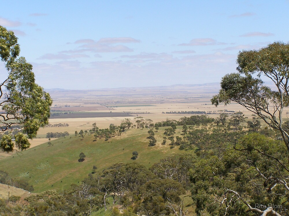 Views from Spring Gully Cons. Red Stringybark forest. Clare S.A. by Rita Blom