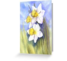 Backlit Daffies Greeting Card