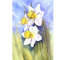 Backlit Daffies Photographic Print