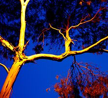 Illuminary Gumtree by Guyzimijz