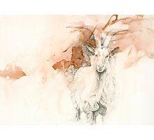 Chinese Zodiac - The Goat Photographic Print