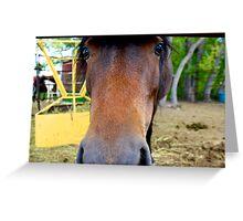 Horse Code Greeting Card