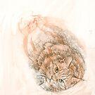 Japanese Bobtail Tabby Cat by Kirsten Glenwright