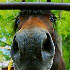 Horse up Close  by Jesse Diaz