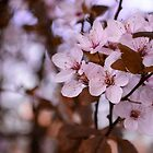 cherry tree by andrea-ioana