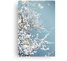 Snow Sakura Canvas Print