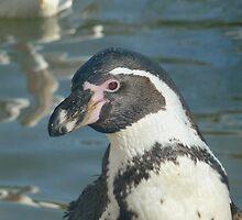 Penguin by Ihazart