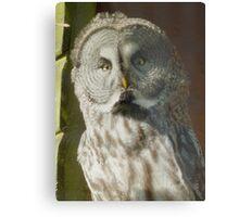 Great Owl Metal Print