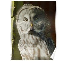 Great Owl Poster
