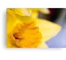 Daffodil-2102 Canvas Print