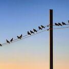 A Pigeons' Perch by Xandru