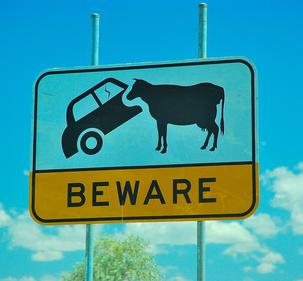Cow Eating Car by Penny Smith