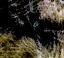 Spider's Web Sticker