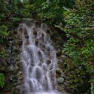 Longwood Falls by Adam Northam