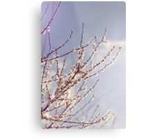 Spring is here again Metal Print
