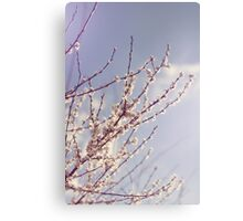 Spring is here again Canvas Print