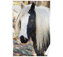 Gypsy Vanner Horse Portrait  Poster