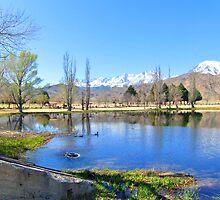 Mill Pond by marilyn diaz