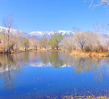 Eastern Sierra Spring by marilyn diaz