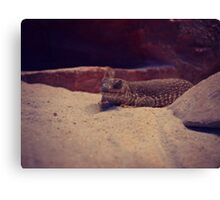 Reptile at Red Rock Canyon Canvas Print