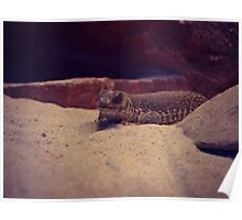 Reptile at Red Rock Canyon Poster