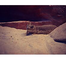 Reptile at Red Rock Canyon Photographic Print